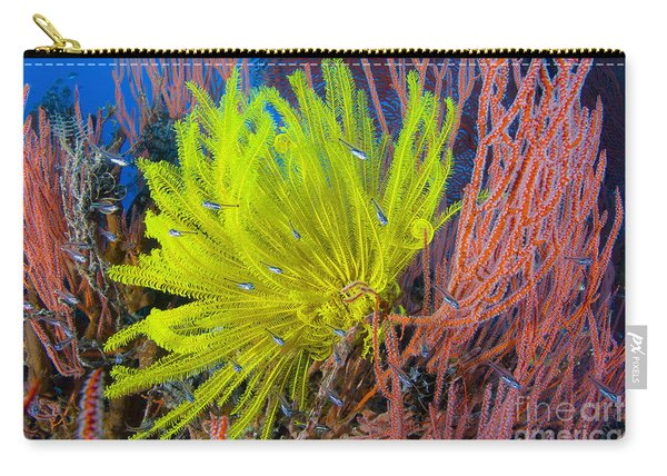 A Yellow Crinoid Feather Star Carry-all Pouch