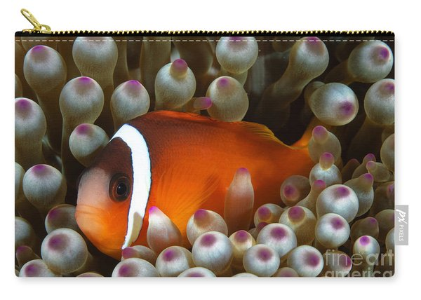 Black Anemonefish, Fiji Carry-all Pouch