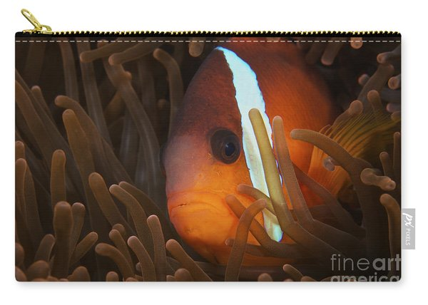 Cinnamon Clownfish In Its Host Anemone Carry-all Pouch