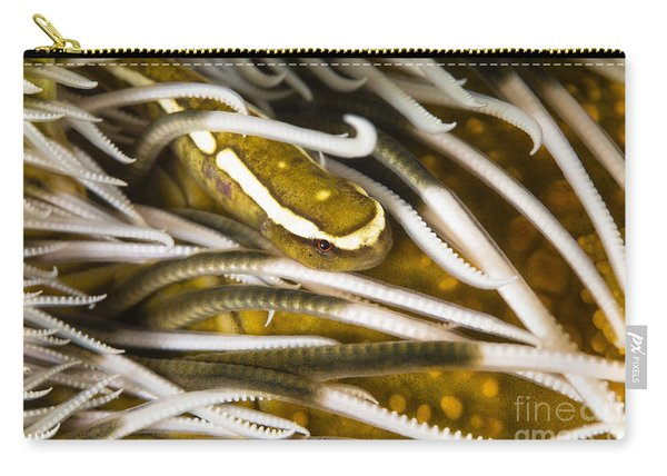 Clingfish On Crinoid, Australia Carry-all Pouch