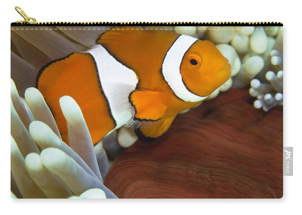 Clown Anemonefish In Anemone, Great Carry-all Pouch