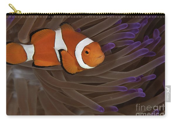 Clownfish In Purple Tip Anemone Carry-all Pouch