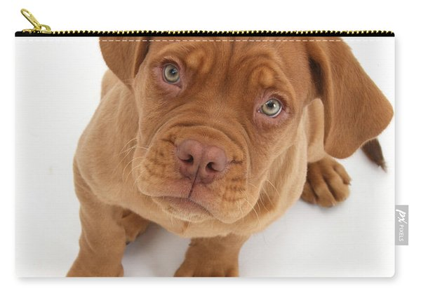 Dogue De Bordeaux Puppy Carry-all Pouch