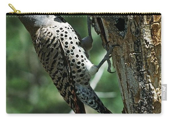 Female Northern Flicker Colaptes Carry-all Pouch