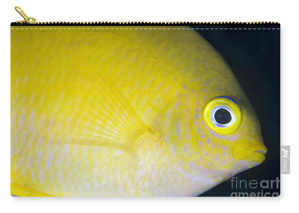 Golden Damsel Close-up, Papua New Carry-all Pouch