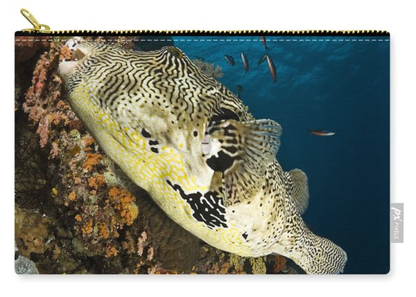 Map Pufferfish, Indonesia Carry-all Pouch