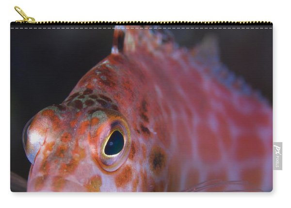 Pixy Hawkfish, Kimbe Bay, Papua New Carry-all Pouch
