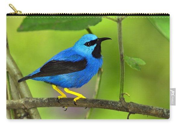 Shining Honeycreeper Carry-all Pouch