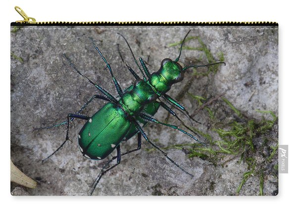 Six-spotted Tiger Beetles Copulating Carry-all Pouch