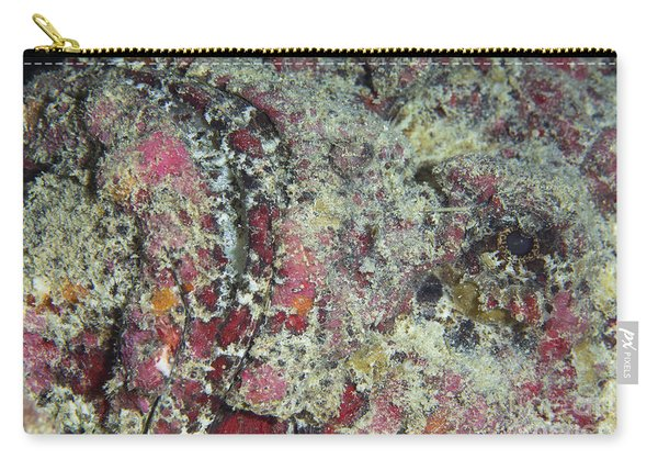Stonefish Portrait, Australia Carry-all Pouch