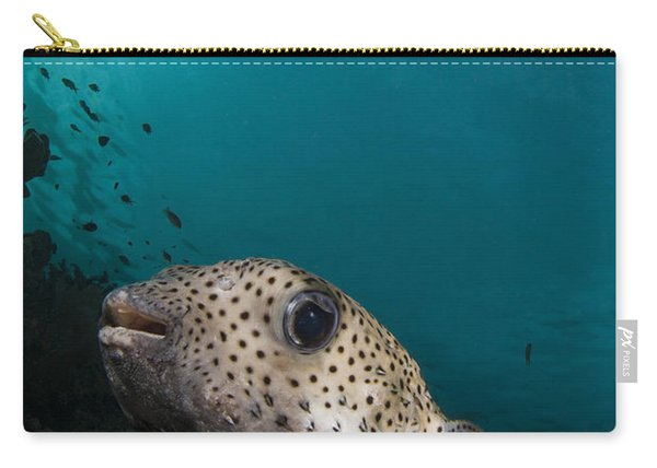 Wide-angle Image Of Pufferfish, Raja Carry-all Pouch