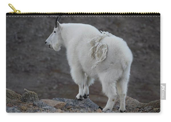 Carry-all Pouch featuring the photograph Mountain Goat Mnt Evans Co  by Margarethe Binkley