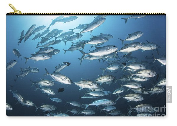 A School Of Big-eye Jacks Above A Coral Carry-all Pouch