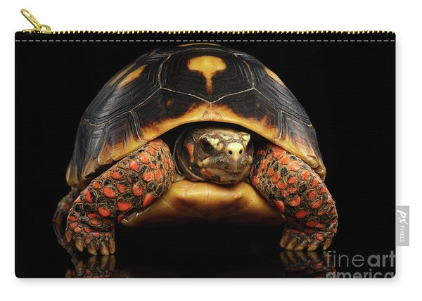 Carry-all Pouch featuring the photograph Close-up Of Red-footed Tortoises, Chelonoidis Carbonaria, Isolated Black Background by Sergey Taran