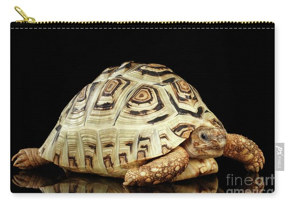 Carry-all Pouch featuring the photograph Closeup Leopard Tortoise Albino,stigmochelys Pardalis Turtle With White Shell On Isolated Black Back by Sergey Taran