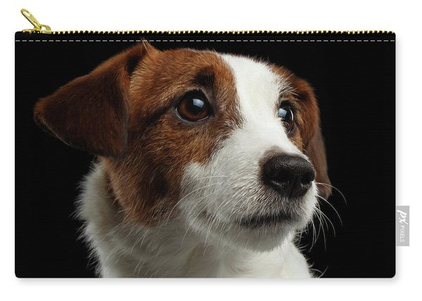 Carry-all Pouch featuring the photograph  Closeup Portrait Of Jack Russell Terrier Dog On Black by Sergey Taran