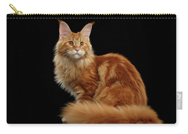 Ginger Maine Coon Cat Isolated On Black Background Carry-all Pouch