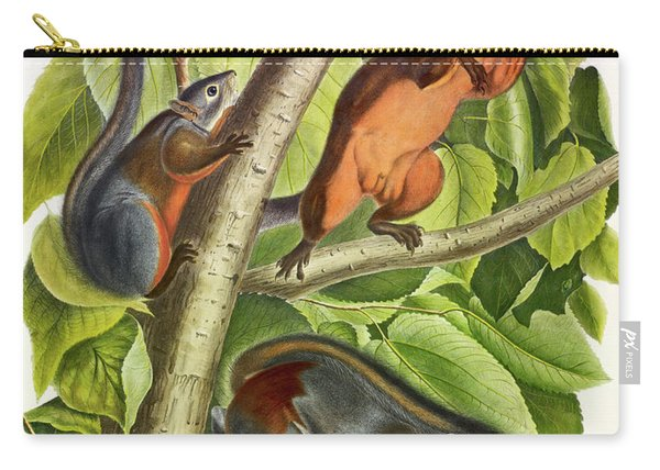Red-bellied Squirrel Carry-all Pouch