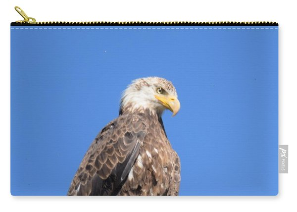 Carry-all Pouch featuring the photograph Bald Eagle Juvenile Perched by Margarethe Binkley