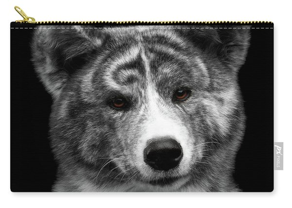 Carry-all Pouch featuring the photograph Closeup Portrait Of Akita Inu Dog On Isolated Black Background by Sergey Taran