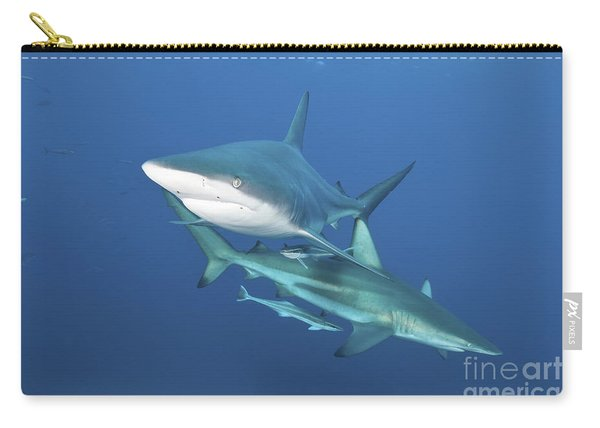 Oceanic Blacktip Sharks With Remora Carry-all Pouch