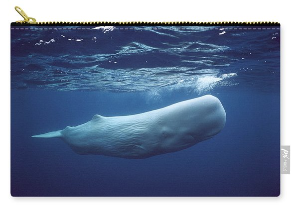 Sperm Whale Physeter Macrocephalus Carry-all Pouch