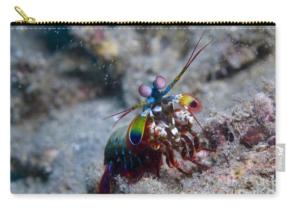 Close-up View Of A Mantis Shrimp, Papua Carry-all Pouch