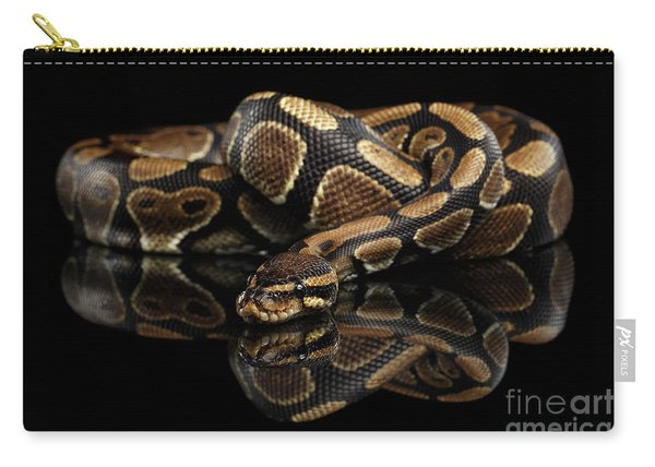 Carry-all Pouch featuring the photograph Ball Or Royal Python Snake On Isolated Black Background by Sergey Taran