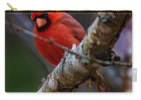 A Cardinal In Spring   Carry-all Pouch