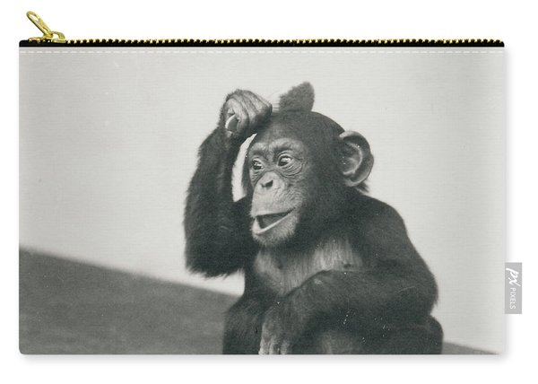A Young Chimpanzee Playing With A Brush Carry-all Pouch