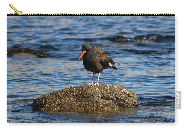 Carry-all Pouch featuring the photograph American Oystercatcher - 2 by Christy Pooschke