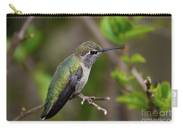 Anna's Hummingbird On Lime Tree Carry-all Pouch