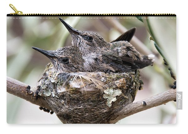 Baby Hummingbirds Outgrowing Their Nest Carry-all Pouch