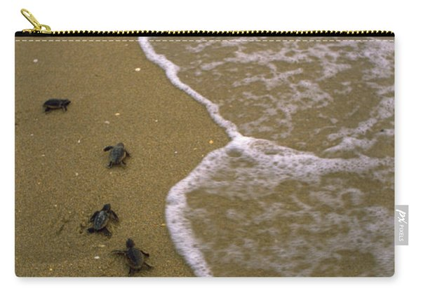 Baby Loggerhead Turtles Head Carry-all Pouch