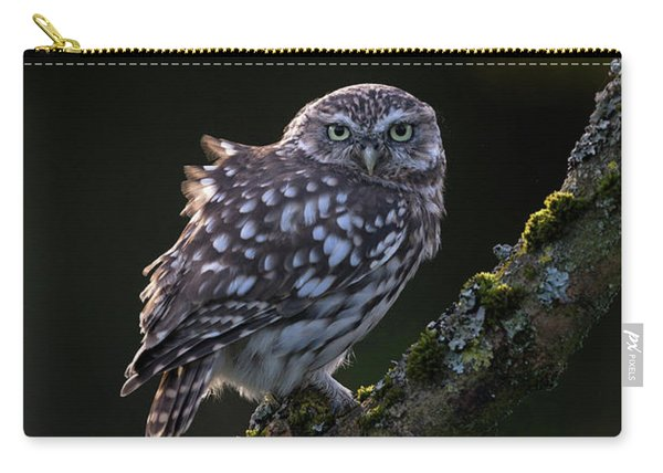 Backlit Little Owl Carry-all Pouch