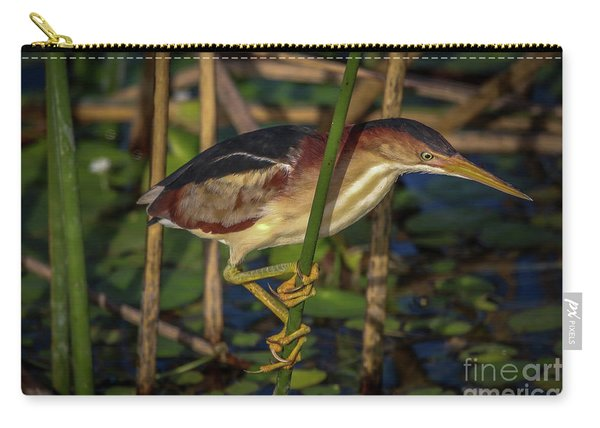 Carry-all Pouch featuring the photograph Balanced Perch Bittern by Tom Claud