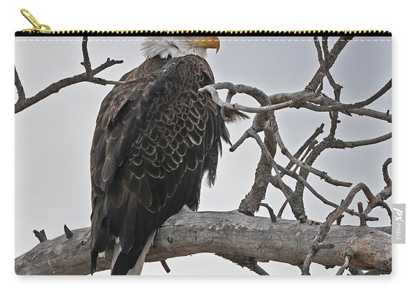 Carry-all Pouch featuring the photograph Bald Eagle In Profile by Bill Gabbert