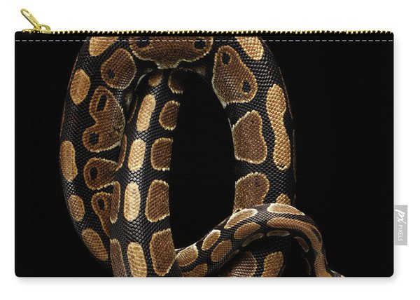 Ball Or Royal Python Snake On Isolated Black Background Carry-all Pouch