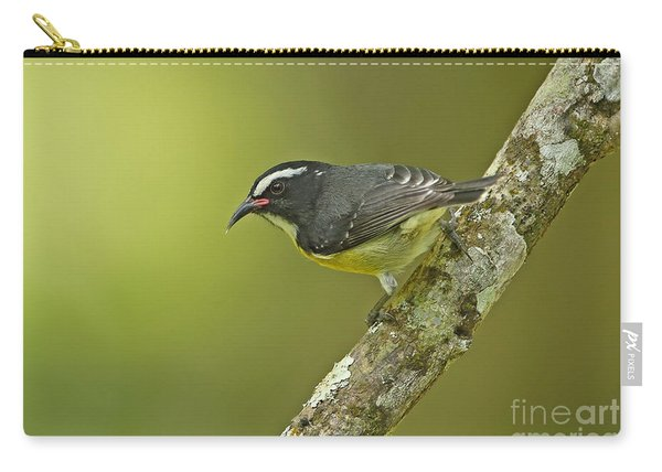 Bananaquit Carry-all Pouch