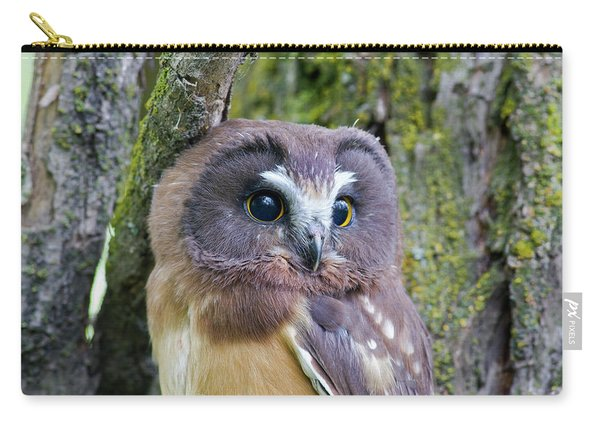 Beautiful Eyes Of A Saw-whet Owl Chick Carry-all Pouch