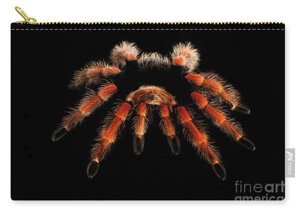 Carry-all Pouch featuring the photograph Big Hairy Tarantula Theraphosidae Isolated On Black Background by Sergey Taran