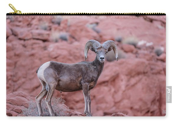 Big Horn Sheep Valley Of Fire Carry-all Pouch