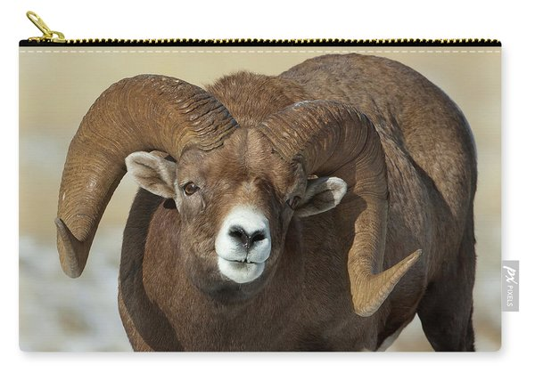 Bighorn Ram In Montana Carry-all Pouch