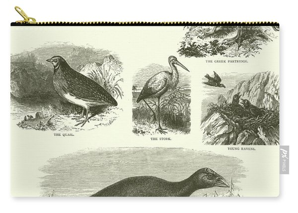 Birds Of Palestine  Carry-all Pouch