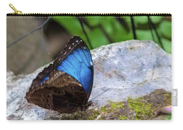 Carry-all Pouch featuring the photograph Black And Blue Butterfly Eating by Raphael Lopez