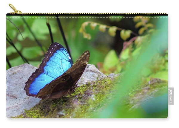 Carry-all Pouch featuring the photograph Black And Blue Butterfly by Raphael Lopez