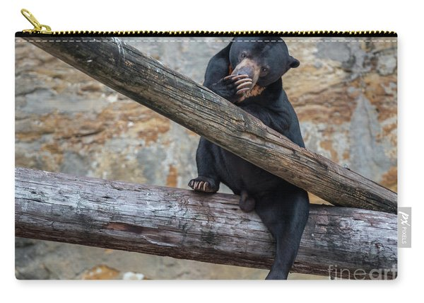 Black Bear Cub Sitting On Tree Trunk Carry-all Pouch