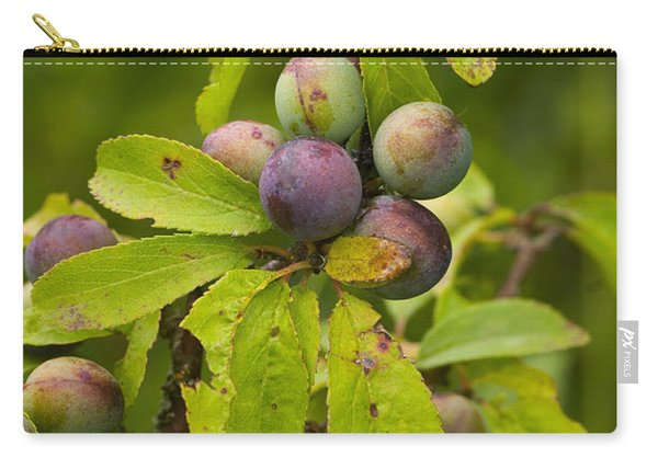 Blackthorn Or Sloe Fruit Carry-all Pouch