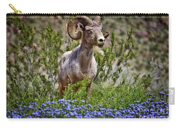 Carry-all Pouch featuring the photograph  Blooms And Bighorn In Anza Borrego Desert State Park  by Sam Antonio Photography