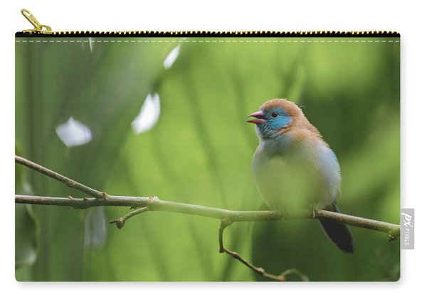 Carry-all Pouch featuring the photograph Blue Bird Chirping by Raphael Lopez